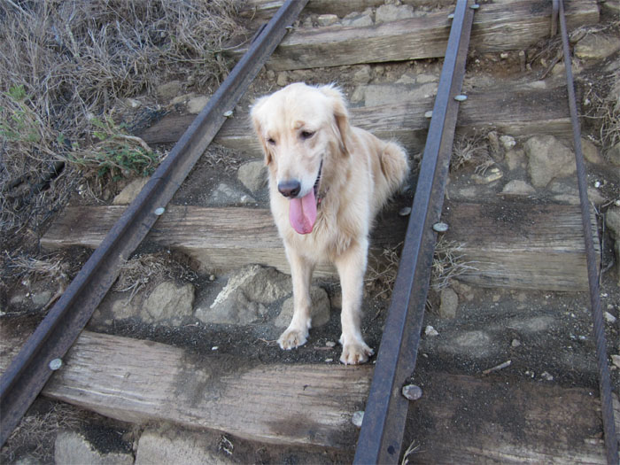 Railroad dog
